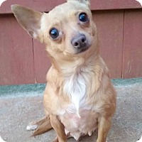 Adopt A Pet :: Bonnie - West Springfield, MA