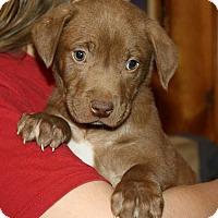 Adopt A Pet :: Milky Way - Southbury, CT