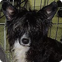 Adopt A Pet :: Carson - Washington, PA