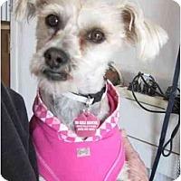 Adopt A Pet :: Josie - Golden Valley, AZ