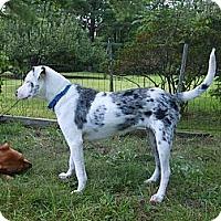 Adopt A Pet :: FLIKA-JJ - Roundup, MT
