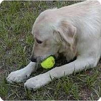 Adopt A Pet :: LEVI - Jacksonville, FL