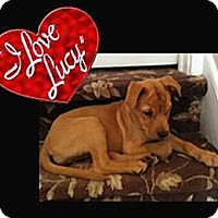 Adopt A Pet :: Lucy - Cheshire, CT