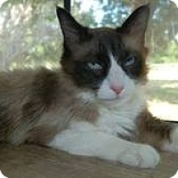 Adopt A Pet :: Poe - Ennis, TX