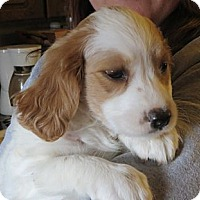 Adopt A Pet :: Kyra - Greenville, RI