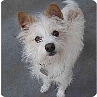 Adopt A Pet :: Roscoe - Van Nuys, CA
