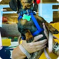 Adopt A Pet :: Speckles - Baton Rouge, LA