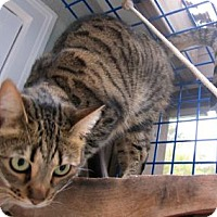 Adopt A Pet :: Mishka - Davis, CA