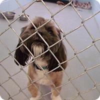 Adopt A Pet :: Marley - Muskegon, MI