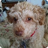 Adopt A Pet :: Morgan - Simi Valley, CA