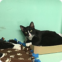 Adopt A Pet :: Axel - Rockaway, NJ