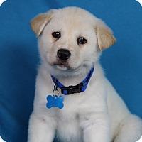 Adopt A Pet :: Jerry - Minneapolis, MN