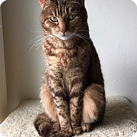 Adopt A Pet :: Bibi - Novato, CA