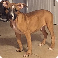 Adopt A Pet :: Simian - Adoption Pending - West Allis, WI