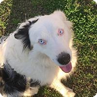 Adopt A Pet :: Henry - Westport, CT