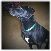 Adopt A Pet :: KOLBY - Medford, WI