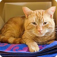Adopt A Pet :: Dandelion - Salem, NH
