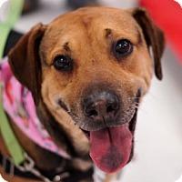 Adopt A Pet :: Kate - Toledo, OH