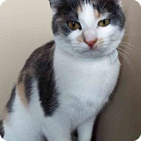 Adopt A Pet :: Margo - Oswego, IL