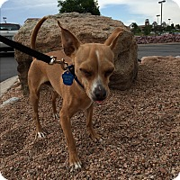 Adopt A Pet :: Tiny - Colorado Springs, CO