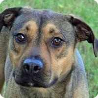 Adopt A Pet :: Xander - Englewood, FL