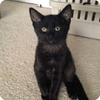 Adopt A Pet :: Trick - McHenry, IL