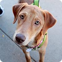 Adopt A Pet :: Briana - Youngsville, NC