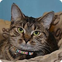 Adopt A Pet :: Miss Magoo - Cincinnati, OH