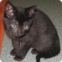 Adopt A Pet :: Storm - Duncan, BC