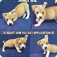 Adopt A Pet :: Ralphie - Oakland Park, FL