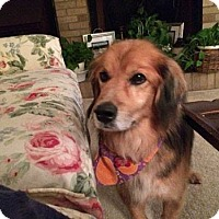 Adopt A Pet :: Terry - Bedford Hills, NY