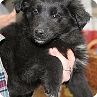 Adopt A Pet :: Xq litter - Dolores - ADOPTED - Livonia, MI