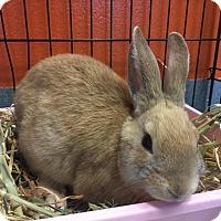 Adopt A Pet :: Banana Pepper - Westminster, CA