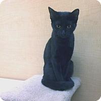 Adopt A Pet :: Raven 2 - Bulverde, TX