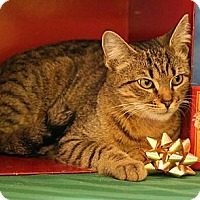 Adopt A Pet :: Dorothy Grace - Washington, VA