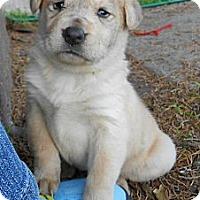 Adopt A Pet :: CINDERELLA - Torrance, CA