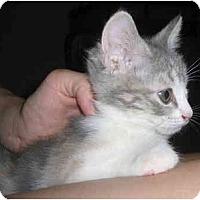 Adopt A Pet :: Winkie - Davis, CA