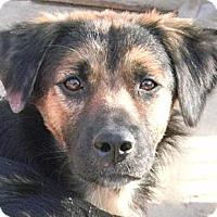 Adopt A Pet :: Nyla - San Ysidro, CA