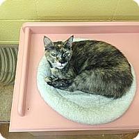Adopt A Pet :: CeeJay - Lake Charles, LA