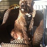 Adopt A Pet :: Phelps - Bridgewater, NJ