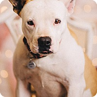 Adopt A Pet :: Tegan - Portland, OR