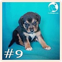 Adopt A Pet :: #9 - Novi, MI