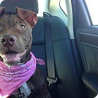 Adopt A Pet :: Mocha - Bellflower, CA
