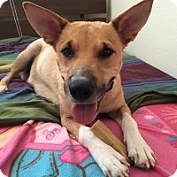 Adopt A Pet :: Effie - La Quinta, CA