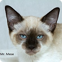 Adopt A Pet :: Mr Mese B - Sacramento, CA