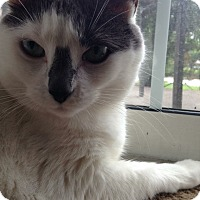 Adopt A Pet :: Patches_Courtesy Post - Columbia, MD