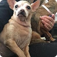 Adopt A Pet :: Chelsea - calimesa, CA