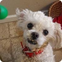 Adopt A Pet :: Mimi - Lodi, CA