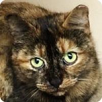 Adopt A Pet :: Valentina - Medford, MA