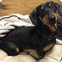 Adopt A Pet :: Gonzo - York, SC